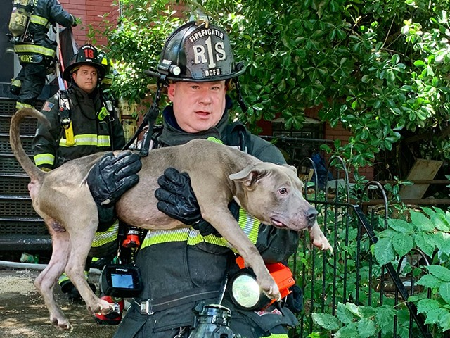 VIDEO: D.C. Firefighters Rescue Six Dogs from Burning Home